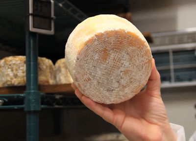 Fig. 3. Cheese made from human toe bacteria. Photo: http://cultofweird.com.